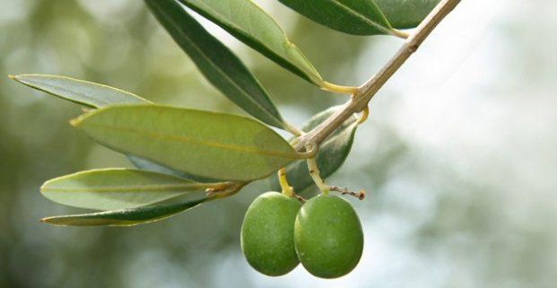 La dieta mediterránea también alimenta el cerebro